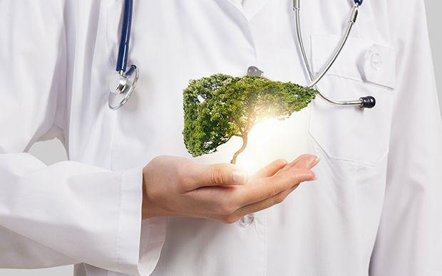 Gesunde Leber: Tipps und Hausmittel, um die Leber zu entgiften und ...