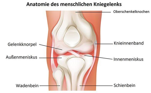 Meniskus: Aufgabe, Anatomie, Meniskusverletzung, Symptome ...