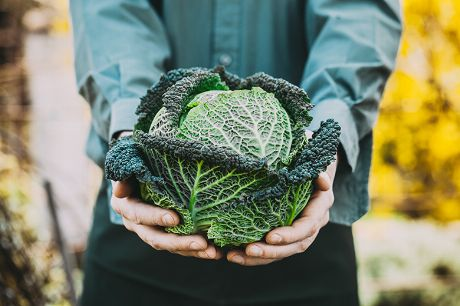 Gemüsekick im Winter