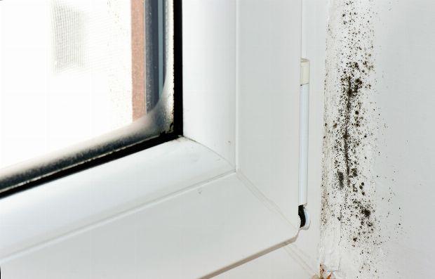 schimmelpilzallergie. Black Bedroom Furniture Sets. Home Design Ideas